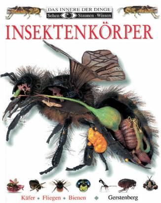 insektenk rper k fer fliegen bienen sehen staunen. Black Bedroom Furniture Sets. Home Design Ideas