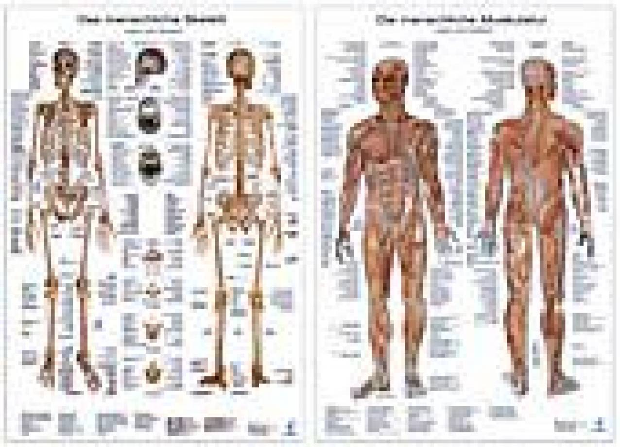 Anatomie-Lerntafeln - Das Skelett und Die menschliche Muskulatur ...